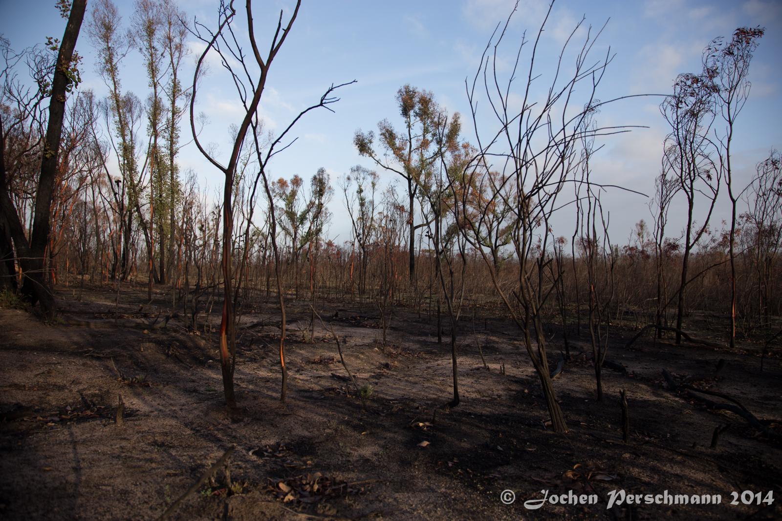 Die verbrannte Landschaft rund um die Taipan Wall